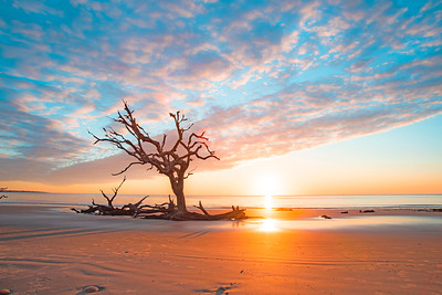 Driftwood Beach Sunrise # 8