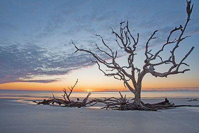 Driftwood Beach Sunrise # 4