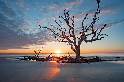 Driftwood Beach Sunrise # 7