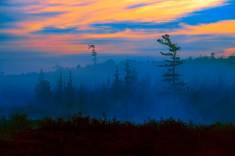 Dawn Skies, Fog, and Trees