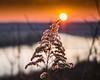 Sunset Plant 01-1020211-2-2-2