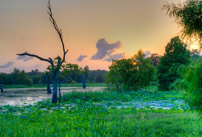Brazos Bend Sunset