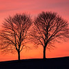 A colorful sunset afterglow provides the backdrop to these trees in rural Montour County, Pennsylvania.