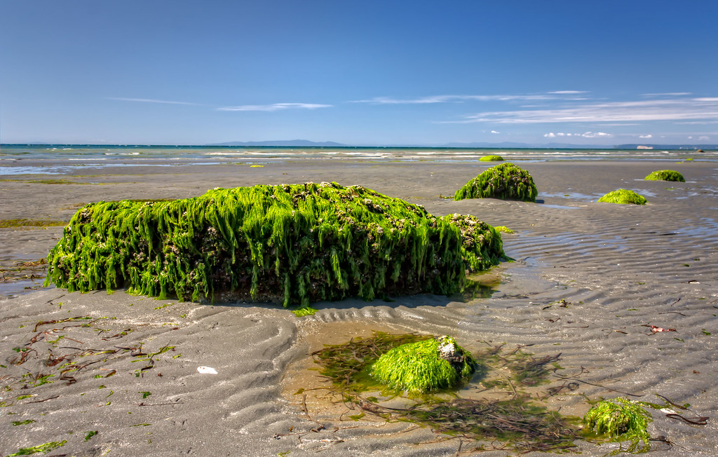 Large Rock Covered in Seaweed