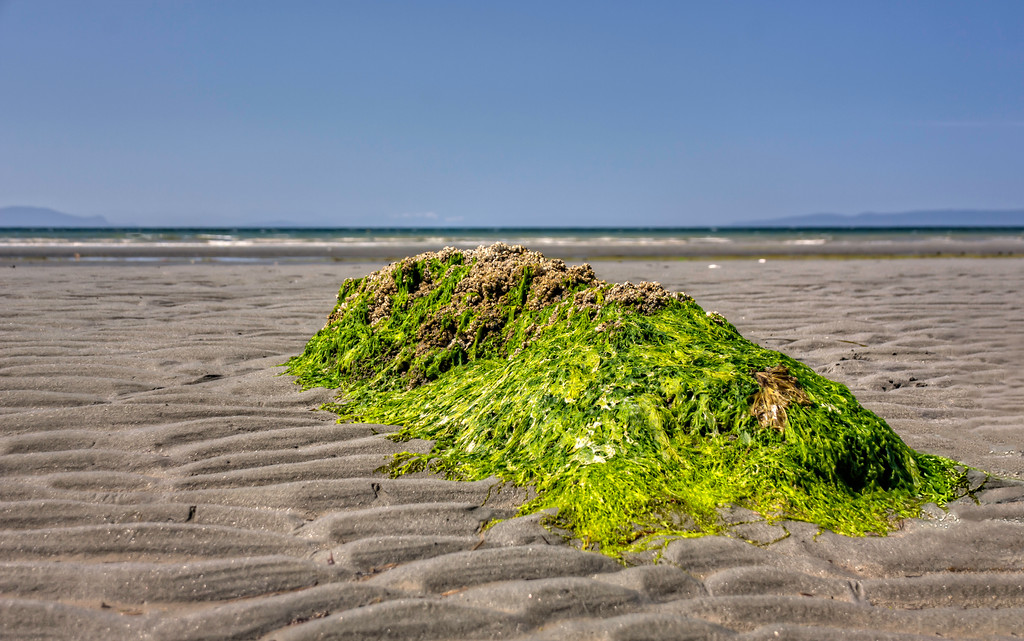 Seaweed Covered Rock