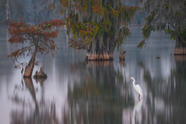 Egret's Haven