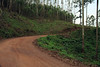 Along the Makhonjwa Mountain road through the eucalyptus forest near the town of Bulembu, Swaziland.