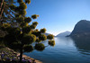 Morning sunlight along the Parco Ciani - across Lake Lugano - to Monte San Salvadore (Switzerland) and the distal Monte San Giorgio