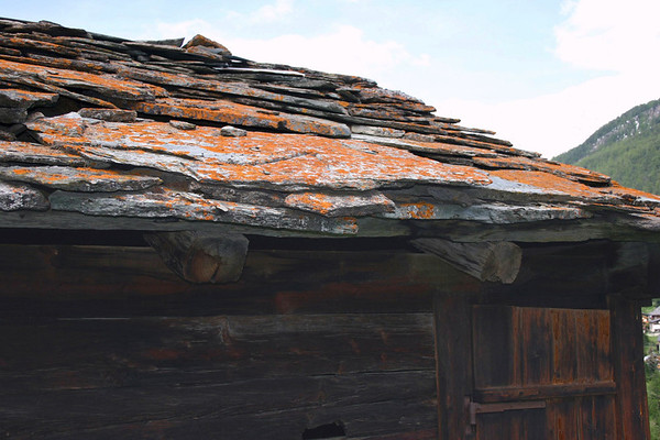 Lichen growing upon the stone-roof of a wooden dwelling - canton of Valais