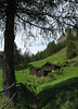 Along the trail to Zmutt - with the Matterhorn in the background - canton of Valais