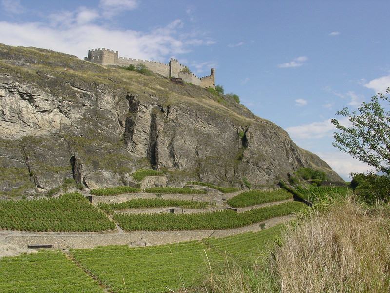 Vineyards below the castle