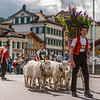 Alpabzug, Appenzell, Switzerland 2014