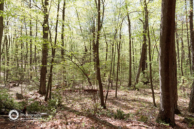 Shabbat Hike: Wilson Mountain Preserve - May 14, 2016