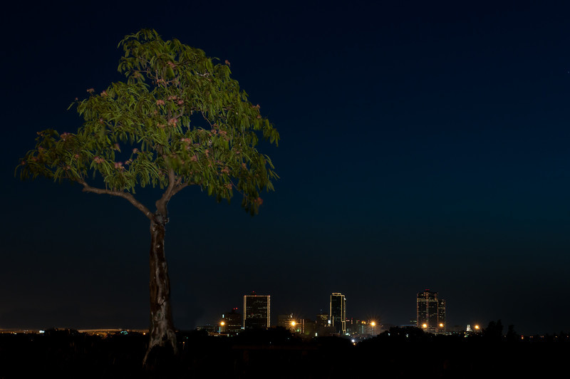 Homeless Tree and Fort Worth Skyline