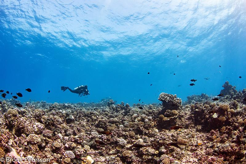 Vast Tahitian Reef