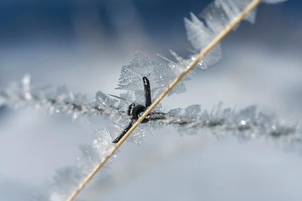 Iced Barbed Wire