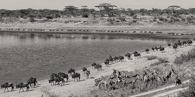 The Great Migration, Serengeti NP, Tanzania
