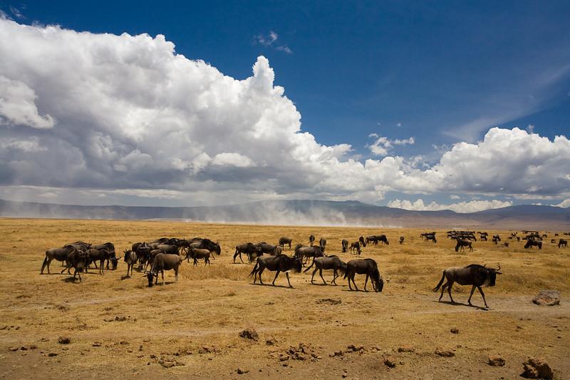 Ngoro Ngoro Crater, Tanzania