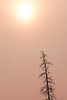 Yellowstone NP - Lone tree against winter sky - 72 ppi