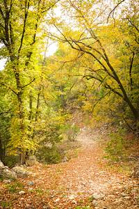 Maple Trail @ LMSNA