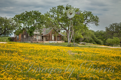 Old House in field of yellow wildflowers
