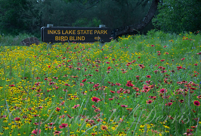 Wildflowers at Inks Sate Park