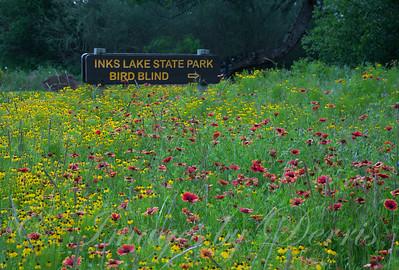 Wildflowers at Inks Sate Park
