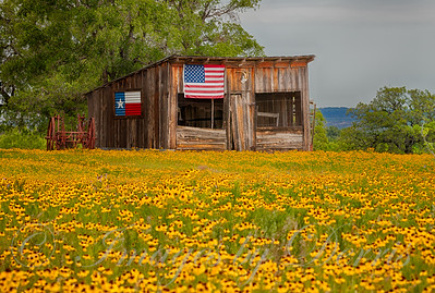 Shed and Wildflowers