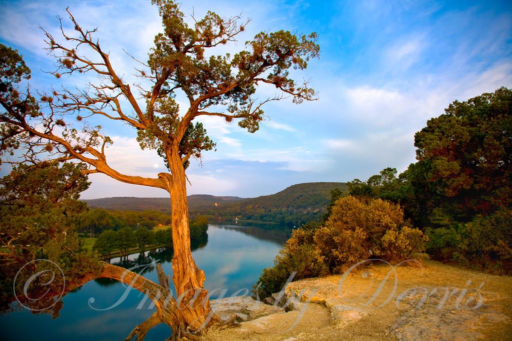 Cedar tree on cliff above Lake Austin