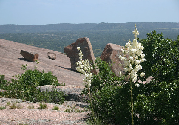 Beyond the florescence atop the bloom stalks of a Soaptree Yucca (Yucca elata) - to the intrusive igneous granite rock boulders atop the western slope of Enchanted Rock.