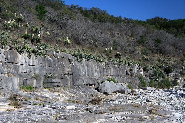Eroded sedimentary limestone clasts and fallen boulders along Flat Rock Creek - adjacent the band of prickly pear cacti along the ledge of the bank, with very early spring season blooms of the yuccas scattered throughout tussock grass, junipers, and live oaks.