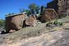 Soaptree Yucca (Yucca elata) and Texas Pricklypear Cactus (Opuntia engelmannii var. lindheimeri) - amongst the exfoliation slab granite boulders, along the western slope of Little Rock.