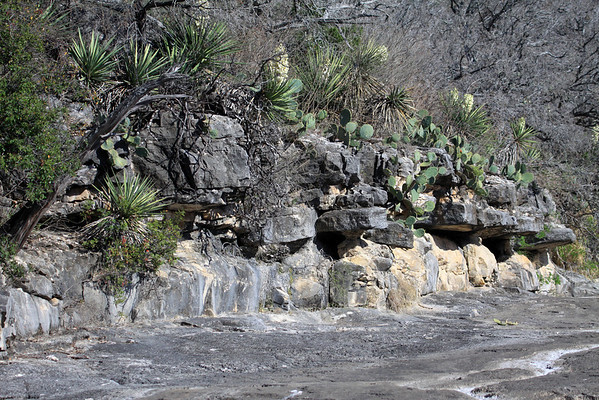 Sedimentary limestone rock along the bed and bank of Flat Rock Creek - amongst the blooming yuccas, prickly pear cactus, live oaks, and junipers - Burnet county.