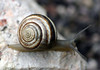 The eyes of snails are located on the ends of the retractable tentacles (eye stalks)