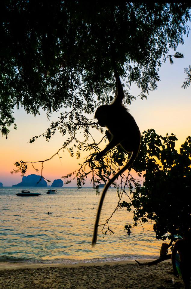 Macacque ruling the  swimming grotto at Pra Nang beach.