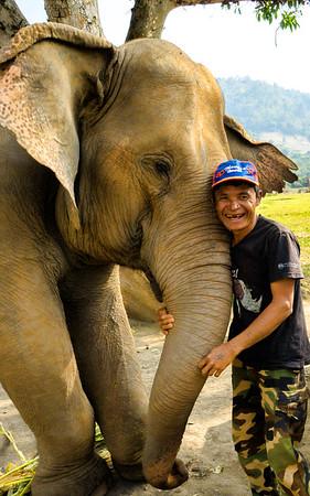 Elephant nature park rescue camp