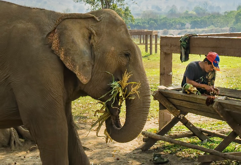 Mahout with his elephant