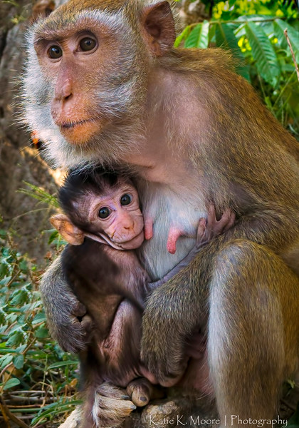 Railay Beach  Macaque and baby
