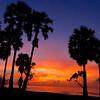 Sugar Palm (Sunrise) (1)