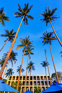 Tall Palm Trees (1)