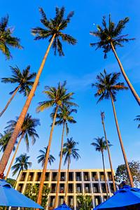 Tall Palm Trees (1)