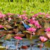 Thale Noi Waterfowl Park, Phatthalung, Thailand (4)
