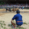 Southern Thai Bull Fighting  (8)