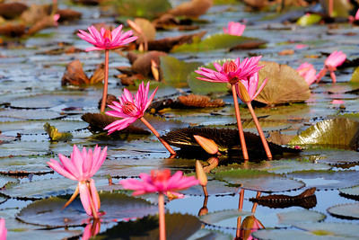 Thale Noi Waterfowl Park, Phatthalung, Thailand (3)