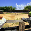 Southern Thai Bull Fighting  (3)