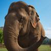 Elephant Smiles
