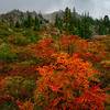 Mountain Ash of Granite Mountain