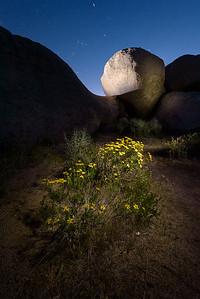 Boulders & Flowers