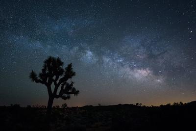 Joshua Tree & Milky Way