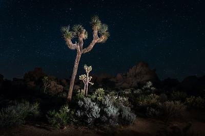 Joshua Trees and stars
